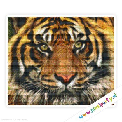 6a_002_pixelhobby_patroon_dier_tijger