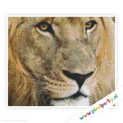 6a_012_pixelhobby_patroon_dier_leeuw